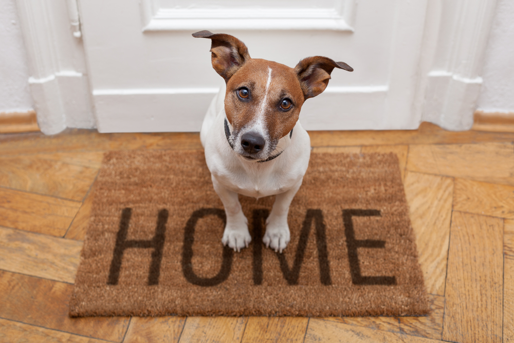 dog sitting on a welcome mat